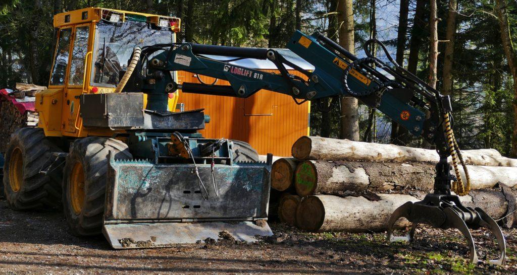 Motor de árbol en un bosque con troncos